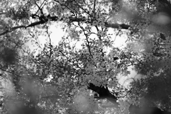 141219-4.JPGのサムネール画像